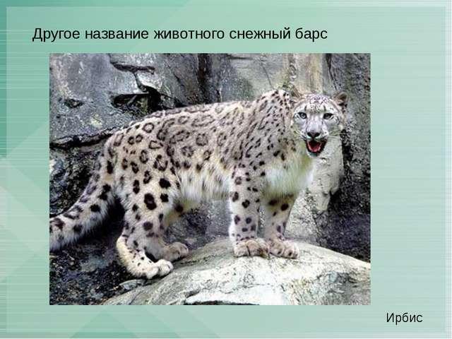 Другое название животного снежный барс Ирбис