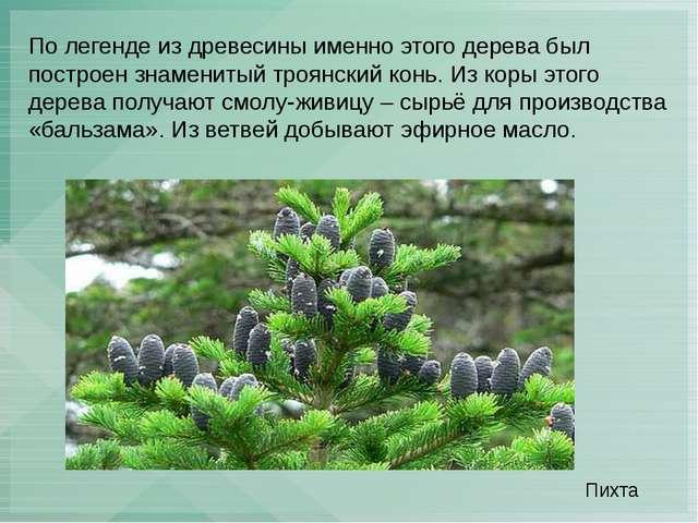По легенде из древесины именно этого дерева был построен знаменитый троянский...