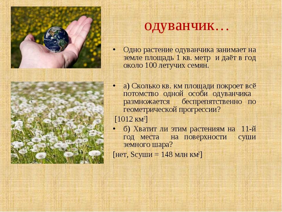 Одно растение одуванчика занимает на земле площадь 1 кв. метр и даёт в год ок...