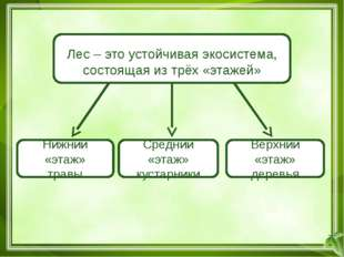 И.И.Шишкин. Папоротник в лесу