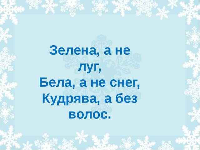 Зелена, а не луг, Бела, а не снег, Кудрява, а без волос.