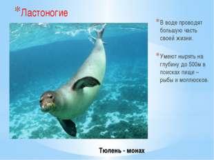 Тюлень - монах Ластоногие В воде проводят большую часть своей жизни. Умеют н