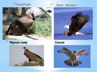 Чёрный гриф Сапсан Степной орёл Орлан - белохвост