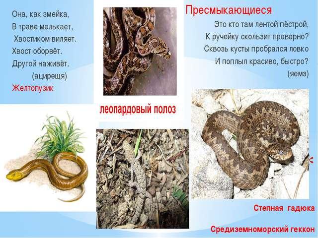 Степная гадюка Средиземноморский геккон Она, как змейка, В траве мелькает, Х...