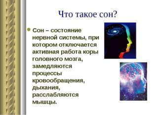 Что такое сон? Сон – состояние нервной системы, при котором отключается актив