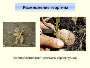 Источники З. А. Клепинина «Биология. Растения. Бактерии. Грибы». Учебник для