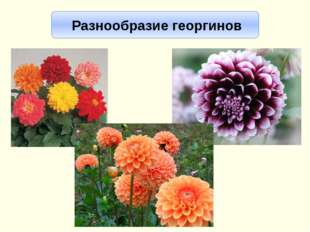 Интернет-ресурсы http://myfl.ru/files/u980/blog/smes_pomponnix_georgin.jpg -