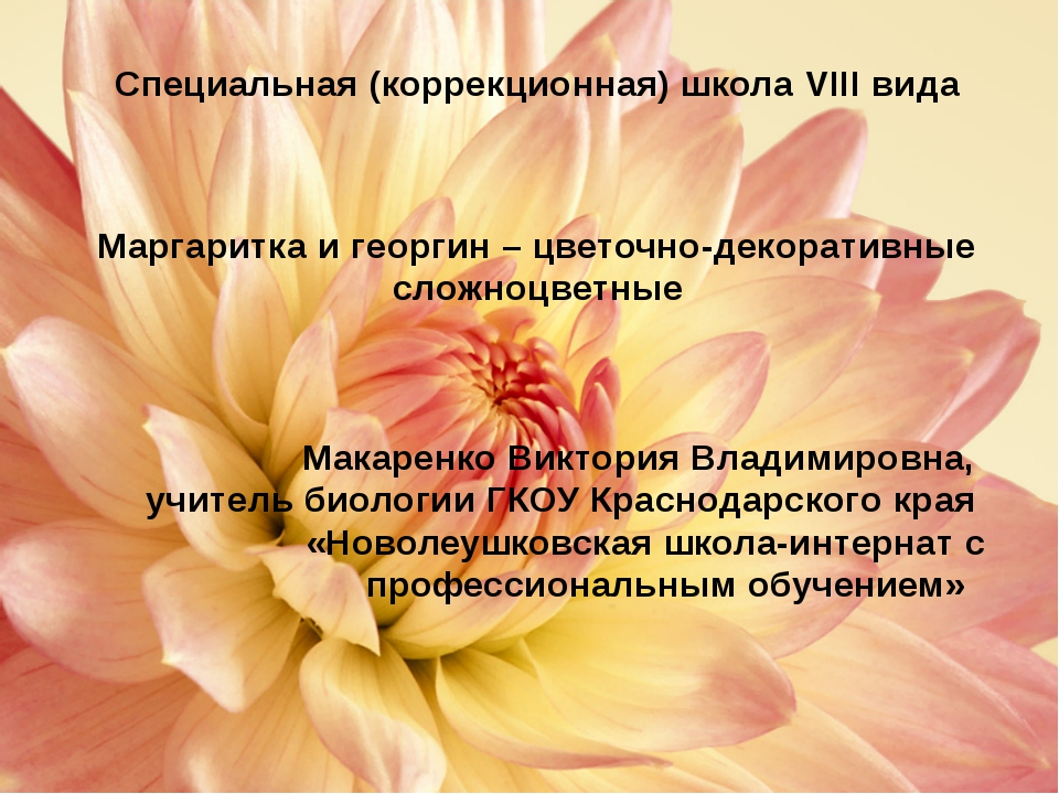 Особенности выращивания маргаритки Маргаритка влаголюбива, светолюбива, моро...