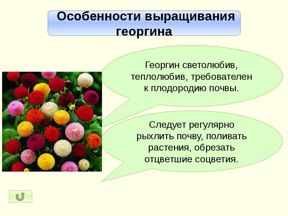 Разнообразие георгинов