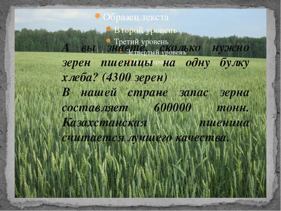 А вы знаете, сколько нужно зерен пшеницы на одну булку хлеба? (4300 зерен) В...