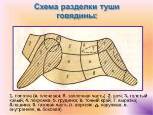 1. лопатка (а. плечевая, б. заплечная часть); 2. шея; 3. толстый краый; 4. по