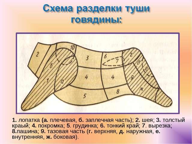 1. лопатка (а. плечевая, б. заплечная часть); 2. шея; 3. толстый краый; 4. по...