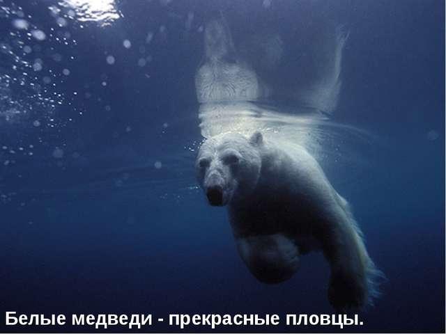 Белые медведи - прекрасные пловцы.