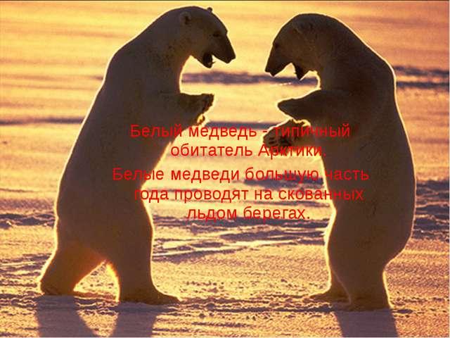 Белый медведь - типичный обитатель Арктики. Белые медведи большую часть года...