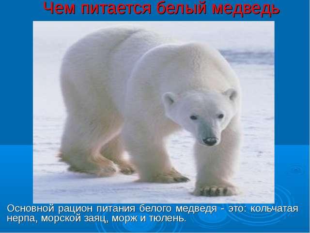 Чем питается белый медведь Основной рацион питания белого медведя - это: коль...