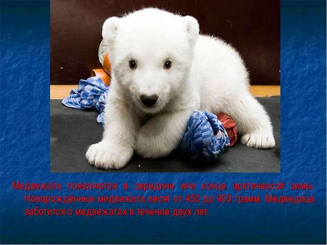 Медвежата появляются в середине или конце арктической зимы. Новорождённые мед...