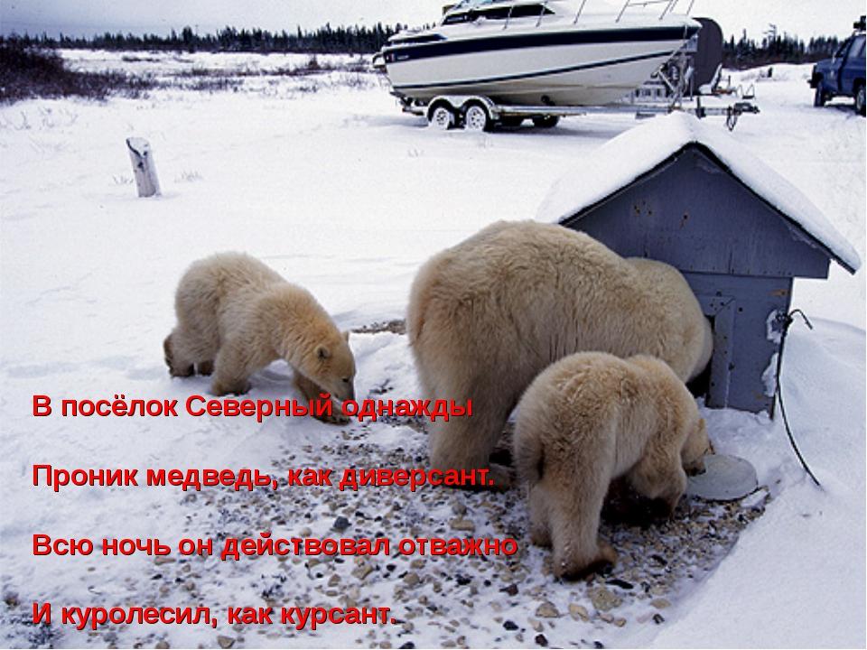 В посёлок Северный однажды Проник медведь, как диверсант. Всю ночь он действо...