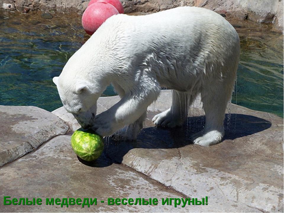 Белые медведи - веселые игруны!