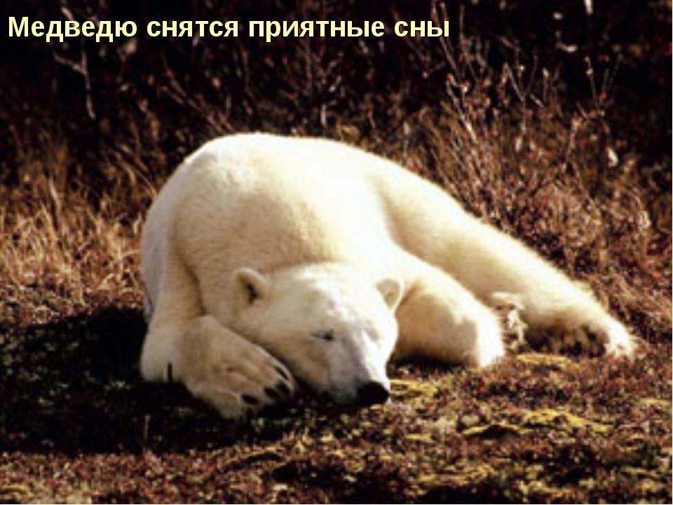 Медведю снятся приятные сны