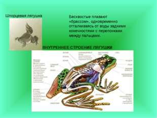 Шпорцевая лягушка Бесхвостые плавают «брассом», одновременно отталкиваясь от