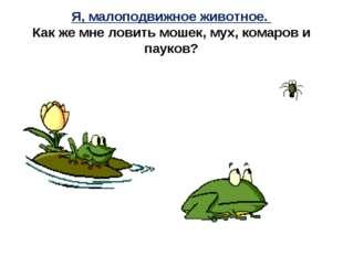 Я, малоподвижное животное. Как же мне ловить мошек, мух, комаров и пауков?
