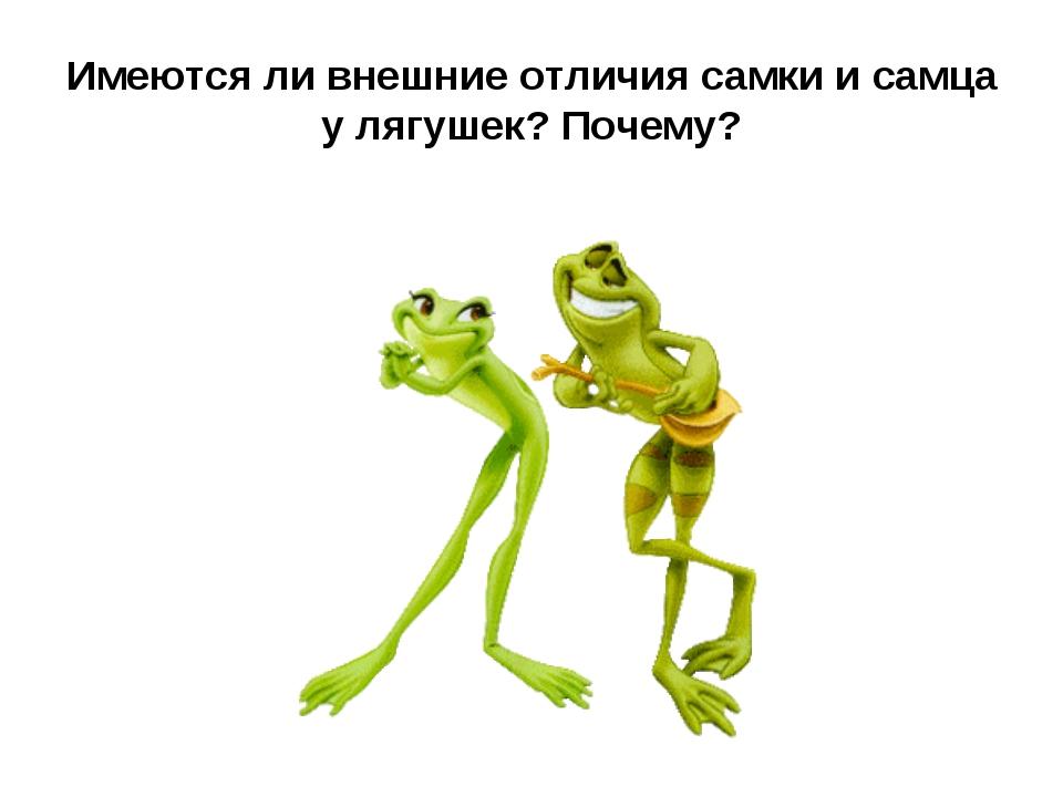 Имеются ли внешние отличия самки и самца у лягушек? Почему?