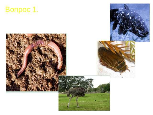 Вопрос 1. Почему все организмы на Земле разные?