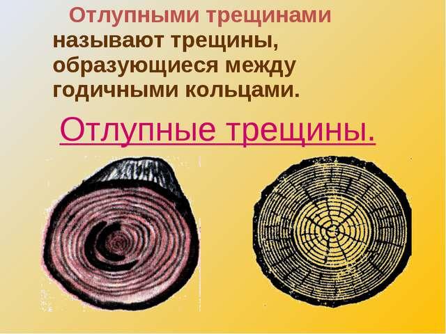 Отлупными трещинами называют трещины, образующиеся между годичными кольцами....