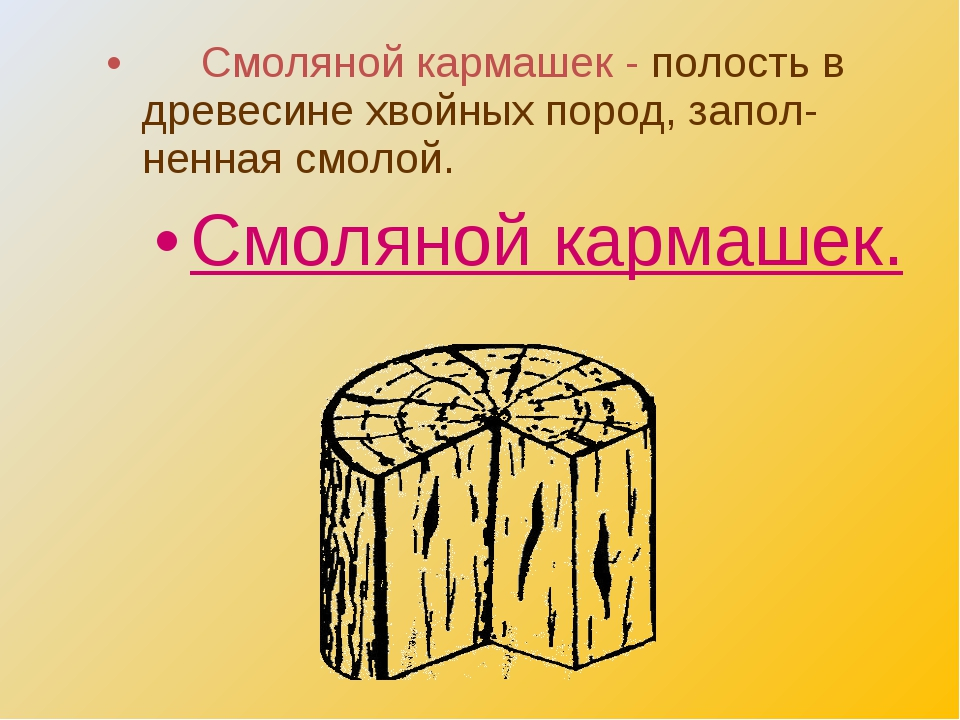 Смоляной кармашек - полость в древесине хвойных пород, запол- ненная смолой....