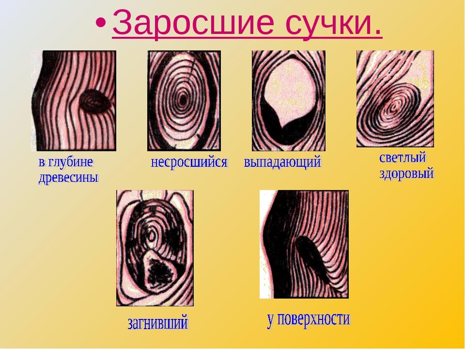 suchki-i-ih-klassifikatsiya