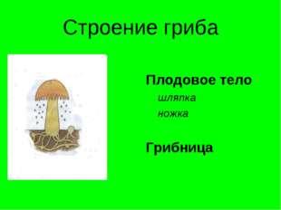 Строение гриба Плодовое тело шляпка ножка Грибница