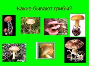 Какие бывают грибы?