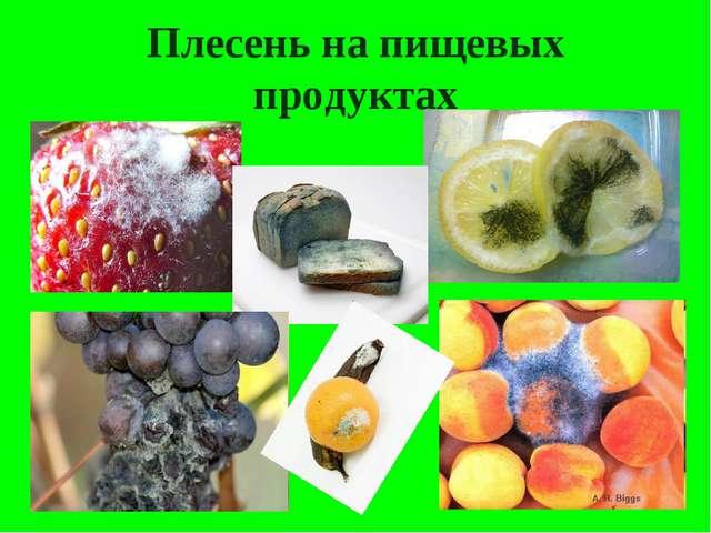 Плесень на пищевых продуктах