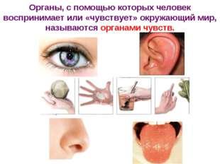 Органы, с помощью которых человек воспринимает или «чувствует» окружающий мир