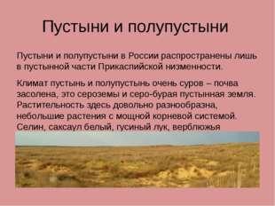 Пустыни и полупустыни Пустыни и полупустыни в России распространены лишь в пу