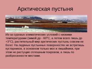 Арктическая пустыня Из-за суровых климатических условий с низкими температура