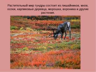 Растительный мир тундры состоит из лишайников, мхов, осоки, карликовые деревц