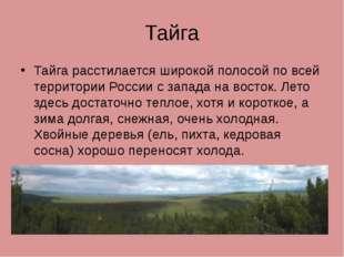 Тайга Тайга расстилается широкой полосой по всей территории России с запада н
