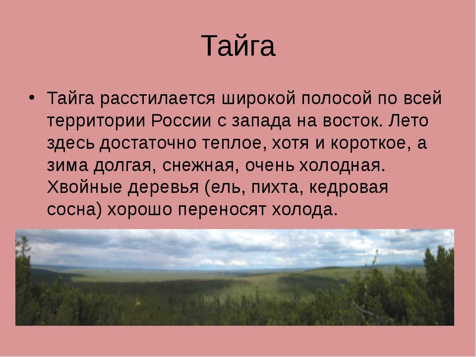 Тайга Тайга расстилается широкой полосой по всей территории России с запада н...