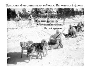 Доставка боеприпасов на собаках. Карельский фронт