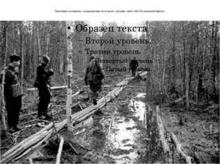 Тропинки из брёвен, соединяющие батальон с ротами. май 1943.Волховский фронт.