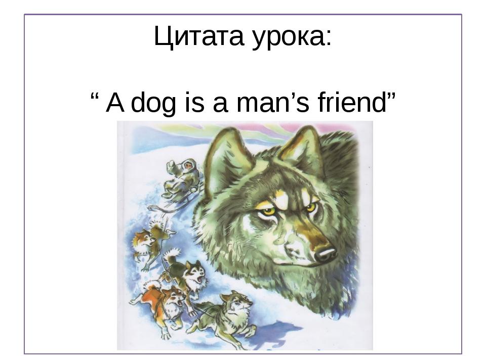 """Цитата урока: """" A dog is a man's friend"""""""