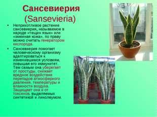 Сансевиерия (Sansevieria) Неприхотливое растение сансевиерия, называемое в н
