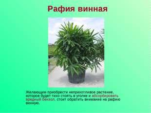 Рафия винная Желающим приобрести неприхотливое растение, которое будет тихо с