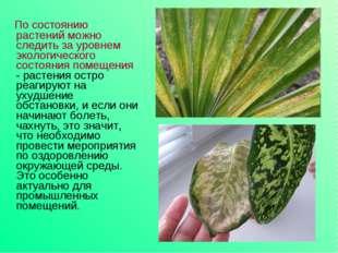 По состоянию растений можно следить за уровнем экологического состояния поме