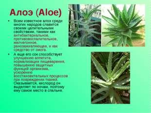 Алоэ (Aloe) Всем известное алоэ среди многих народов славится своими целител