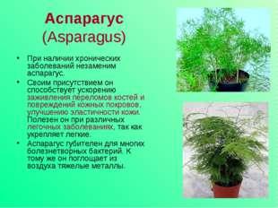 Аспарагус (Asparagus) При наличии хронических заболеваний незаменим аспарагус