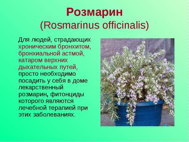 Розмарин (Rosmarinus officinalis) Для людей, страдающих хроническим бронхитом...