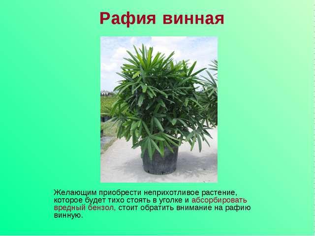 Рафия винная Желающим приобрести неприхотливое растение, которое будет тихо с...