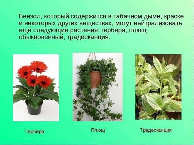 Бензол, который содержится в табачном дыме, краске и некоторых других вещест...
